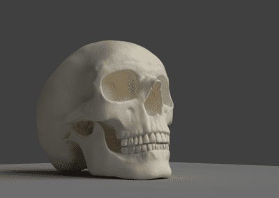 Study of 3D digital sculpture in Blender, anatomically incorrect skull. Model in high poly.